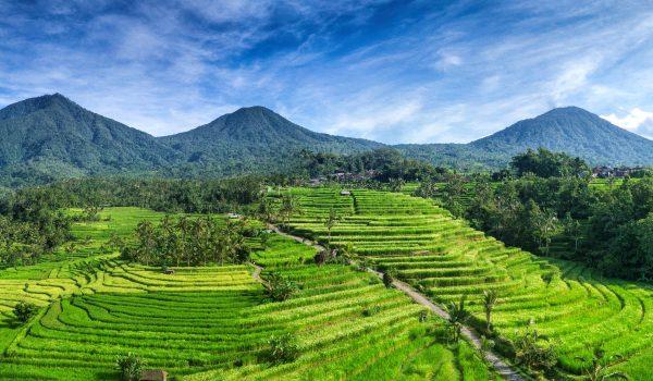 Jatiluwih_rice_terraces